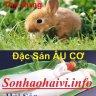sonhaohaivi