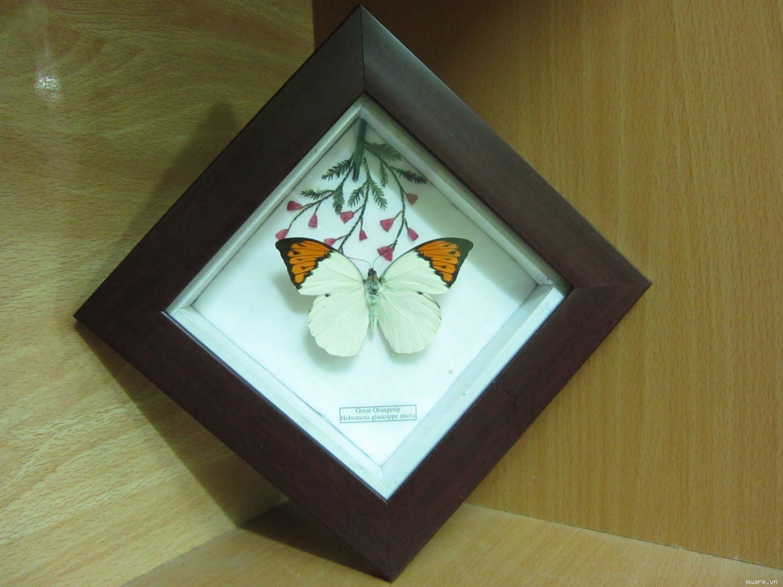 Tranh bướm MS%201A025%20(1)_1290956062